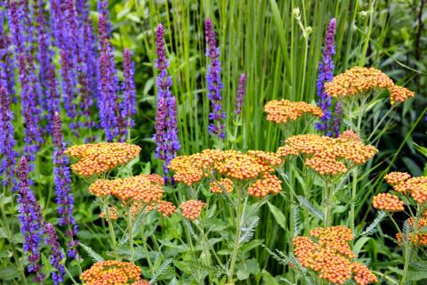 V nejvýše položené části zahrady nedaleko jezírka trvalkové záhony samozřejmě také nechybí, i této kompozici propůjčují příjemnou lehkost. Kromě již pro zahradu tradiční šalvěje tu vedle sebe rostou také světle žluté sápy Russelovy (Phlomis russeliana) a hned několik kultivarů řebříčku obecného (Achillea millefolium). Tento domácí druh je tu zastoupen v kultivaru s květy v meruňkovém odstínu s názvem Feuerland a v odrůdě se svěže růžovým květenstvím, Appleblossom. Později na tyto trvalky naváže třapatkovka nachová (Echinacea purpurea), která na své květy naláká kromě motýlů a včel také užitečné čmeláky